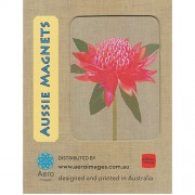 Magnet - Waratah by Gillian Mary