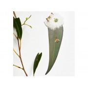 Bookmark - Leaf White