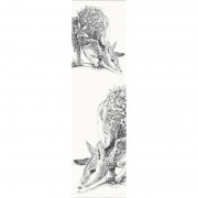 Bookmark -  Bridled Nailtail Wallaby