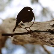 Metalbird - Robin
