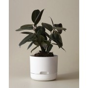 Mr Kitly x Decor Selfwatering Plant Pot 170mm - White