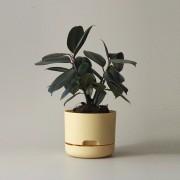 Mr Kitly x Decor Selfwatering Plant Pot 170mm - Buff