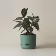 Mr Kitly x Decor Selfwatering Plant Pot 170mm - Dark Moss