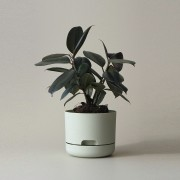 Mr Kitly x Decor Selfwatering Plant Pot 170mm - Fog