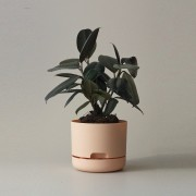 Mr Kitly x Decor Selfwatering Plant Pot 170mm - Pale Apricot