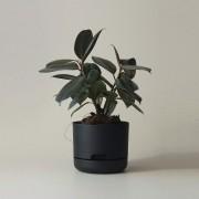Mr Kitly x Decor Selfwatering Plant Pot 170mm - Black