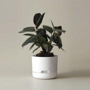 Mr Kitly x Decor Selfwatering Plant Pot 170mm - White