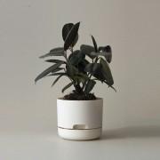 Mr Kitly x Decor Selfwatering Plant Pot 170mm - White Linen