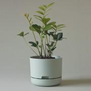 Mr Kitly x Decor Selfwatering Plant Pot 215mm - Fog