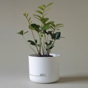 Mr Kitly x Decor Selfwatering Plant Pot 215mm - White