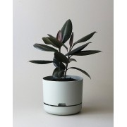 Mr Kitly x Decor Selfwatering Plant Pot 250mm - Fog