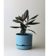 Mr Kitly x Decor Selfwatering Plant Pot 250mm - Pond Blue