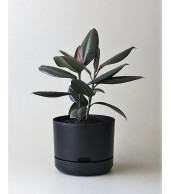Mr Kitly x Decor Selfwatering Plant Pot 250mm - Black