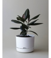 Mr Kitly x Decor Selfwatering Plant Pot 250mm - White