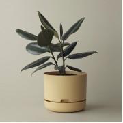 Mr Kitly x Decor Selfwatering Plant Pot 250mm - Buff