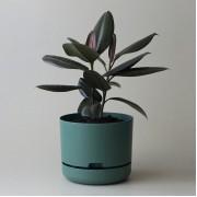 Mr Kitly x Decor Selfwatering Plant Pot 250mm - Dark Moss