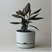 Mr Kitly x Decor Selfwatering Plant Pot 250mm - Fog