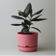 Mr Kitly x Decor Selfwatering Plant Pot 250mm - Persimmon