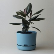 Mr Kitly x Decor Selfwatering Plant Pot 250mm - Pond Blue