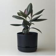 Mr Kitly x Decor Selfwatering Plant Pot 250mm - Black