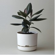 Mr Kitly x Decor Selfwatering Plant Pot 250mm - White