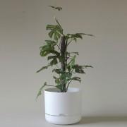 Mr Kitly x Decor Selfwatering Plant Pot 300mm - White